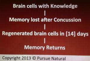 Memory Regeneration